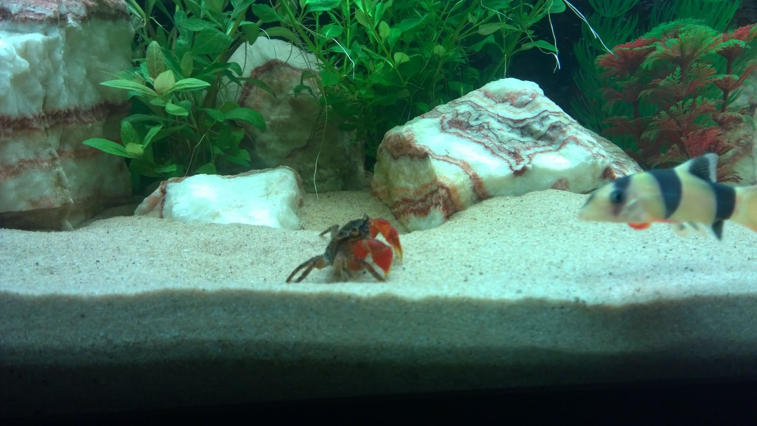fish tank picture - Its a stand off....