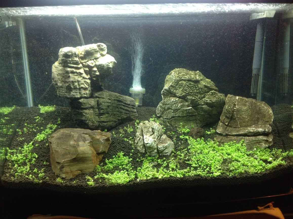 fish tank picture - Turning the floor into a carpet. This live carpeting plant is CUBA, an amazing micro small growth carpeting plant, requires a slight pro level involvement but amazing to look at once grown completely. This is my first attempt at a carpeting aquarium.
