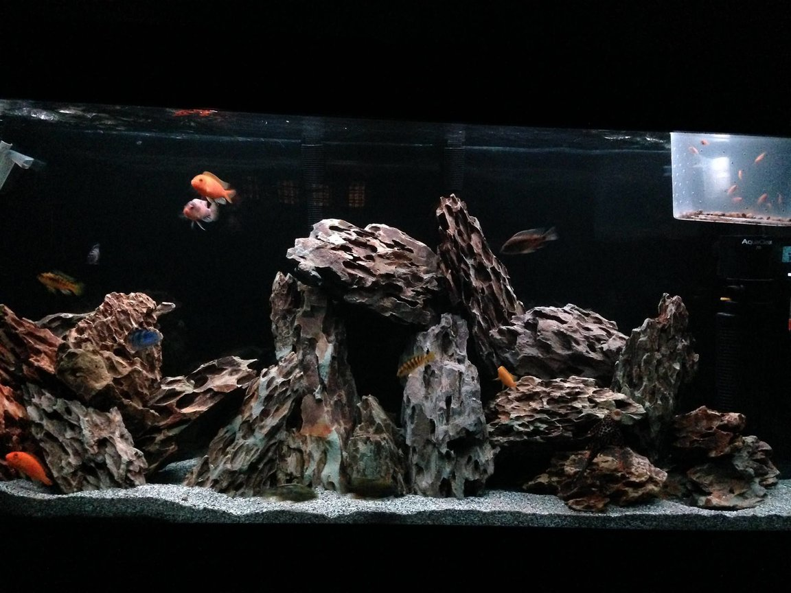 fish tank picture - Eerie Dragon Stone