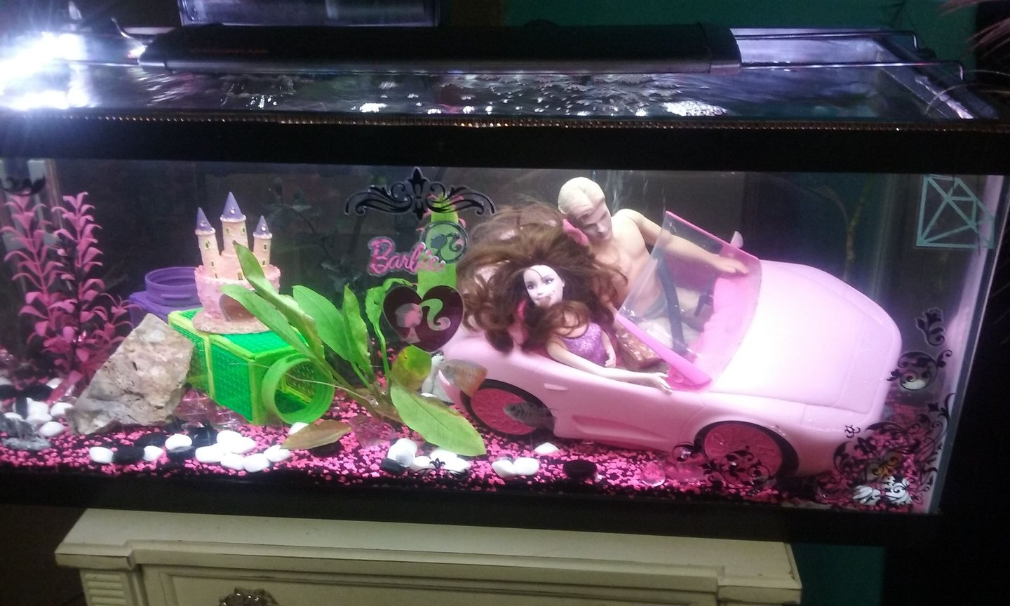 fish tank picture - Barbie Down Under