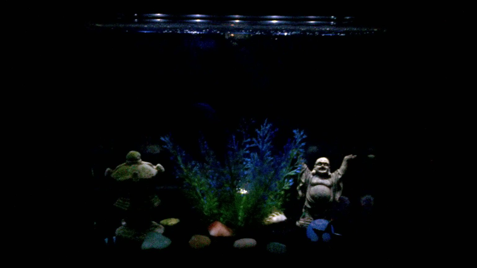 fish tank picture - Night time tank
