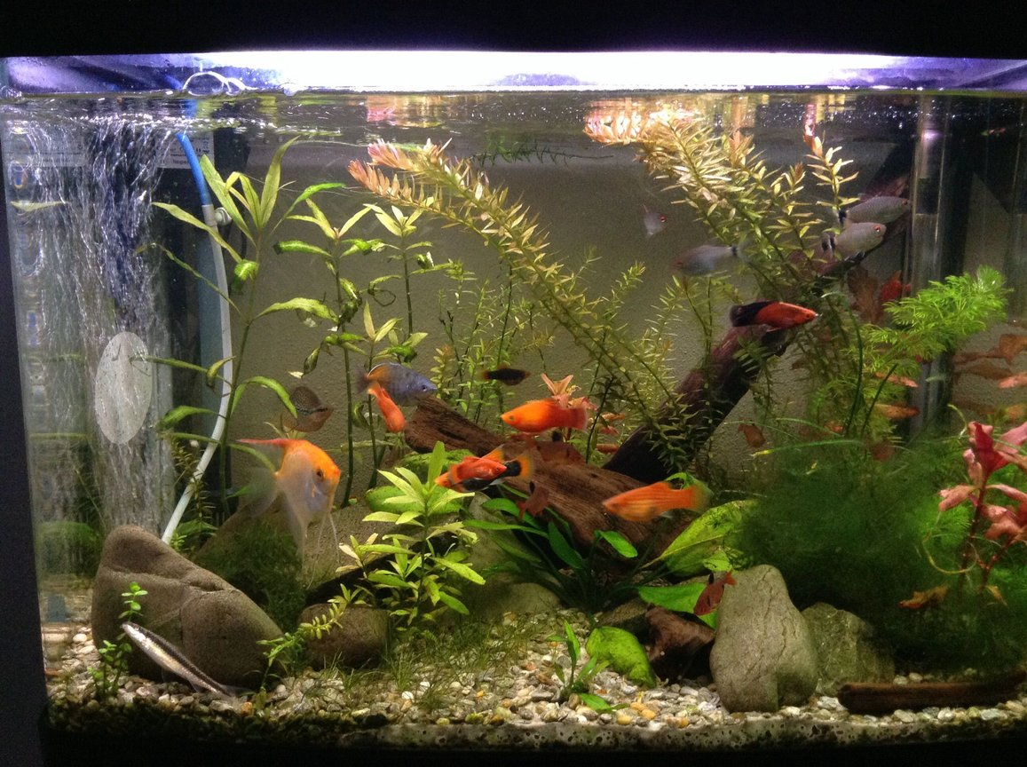 fish tank picture - The same tank just a bit later