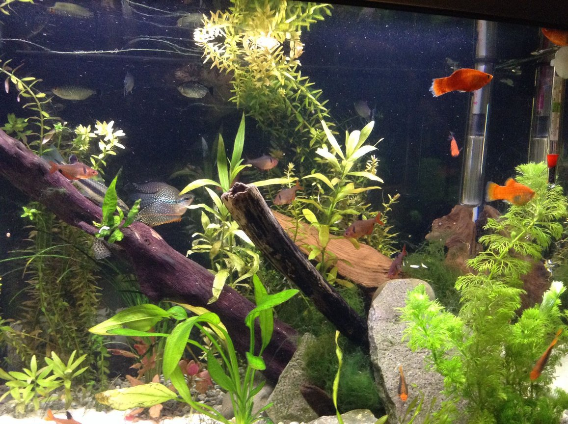 fish tank picture - The same tank but a new aquascape