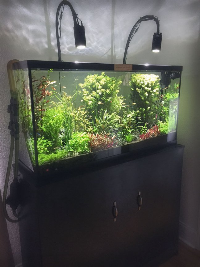 fish tank picture - 60 Gallon Planted Community Fish with Stand