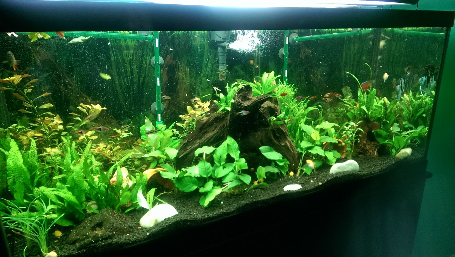 fish tank picture - My tanks 75 gal low tech