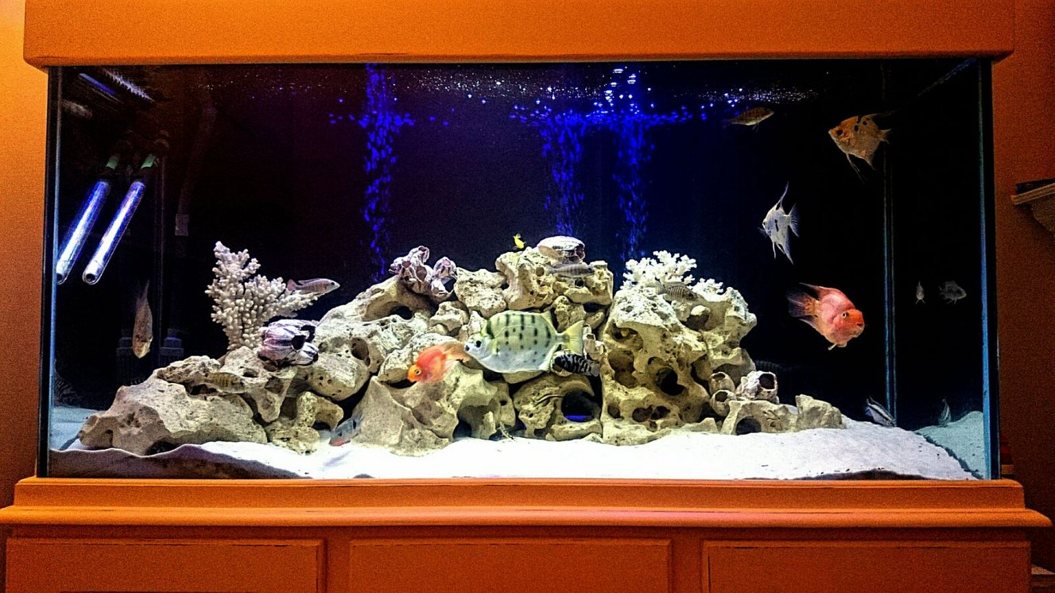 fish tank picture - Better quality picture to swap with original upload.