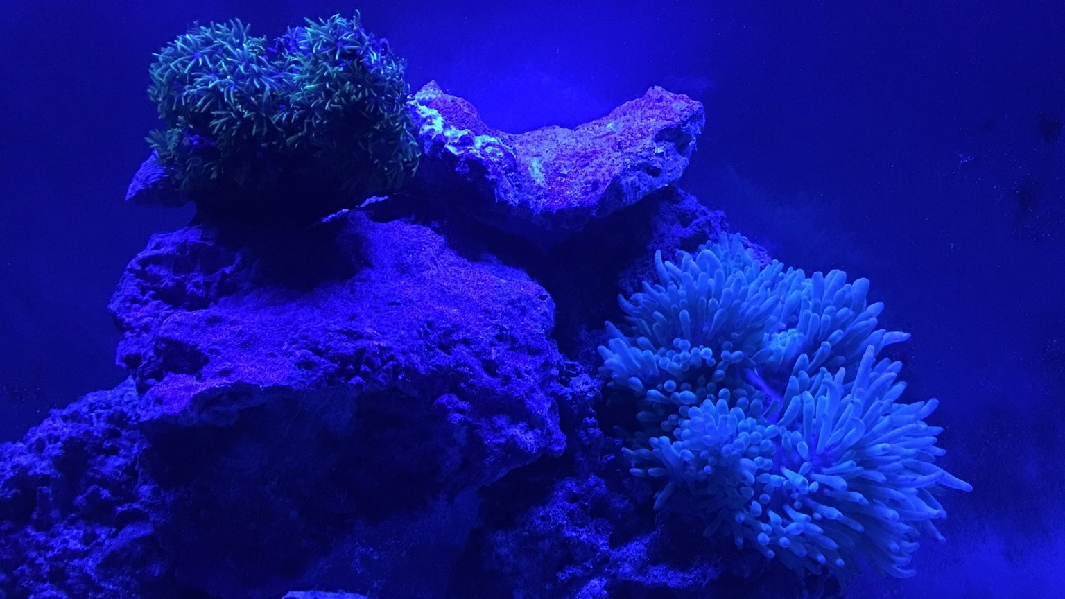 fish tank picture - Moon light glow