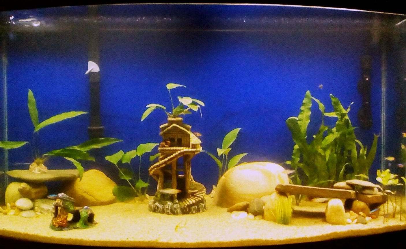 fish tank picture - Full view of my 46gal Bowfront Tank. Fish just waking up.