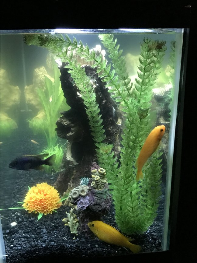 fish tank picture - RJ and Sunny