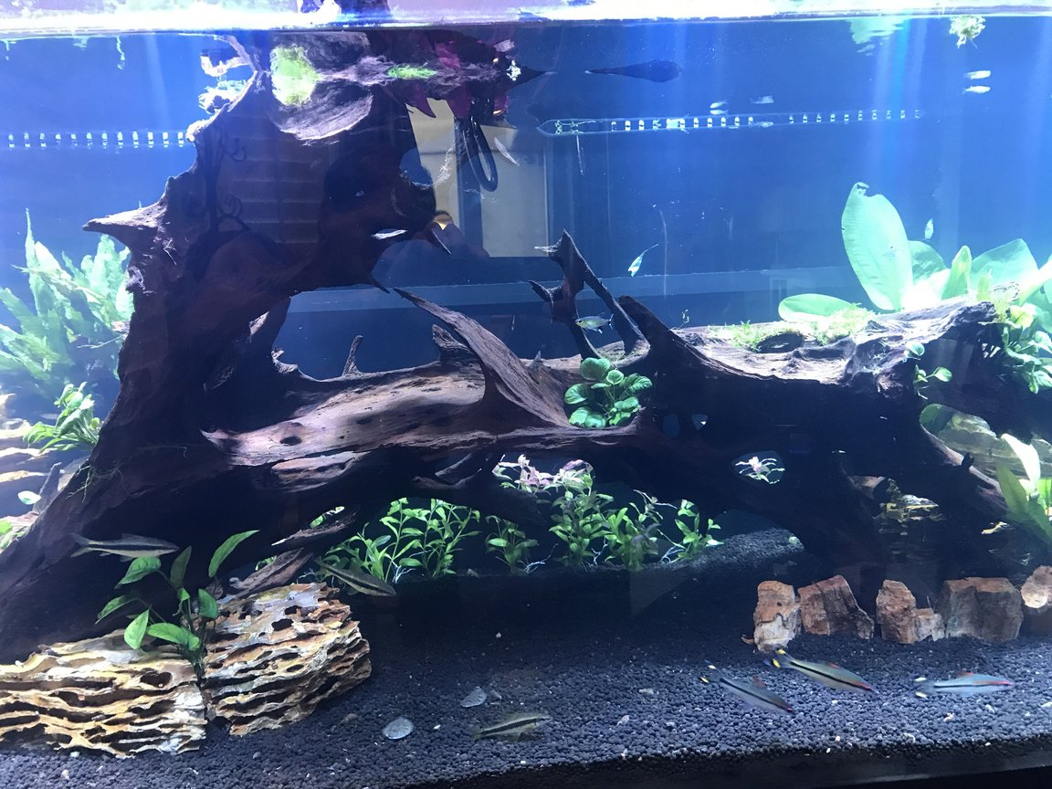 fish tank picture - Middle tank