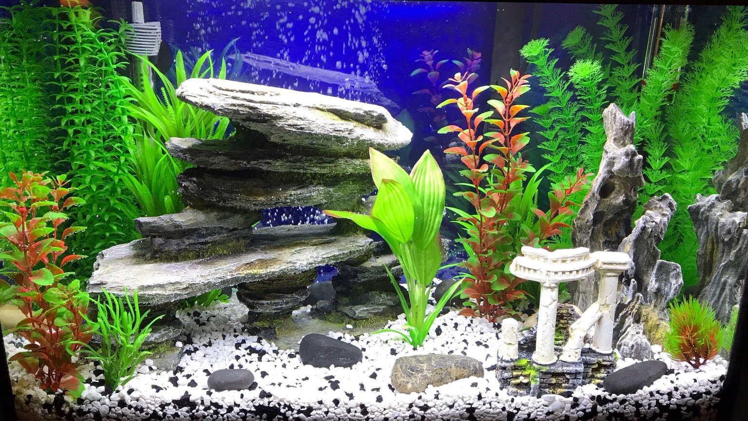 fish tank picture - Tank before fish
