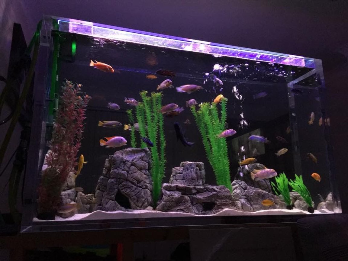 fish tank picture - Night shot