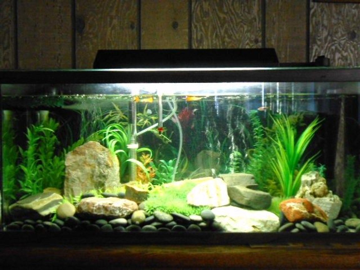 fish tank picture - One more.