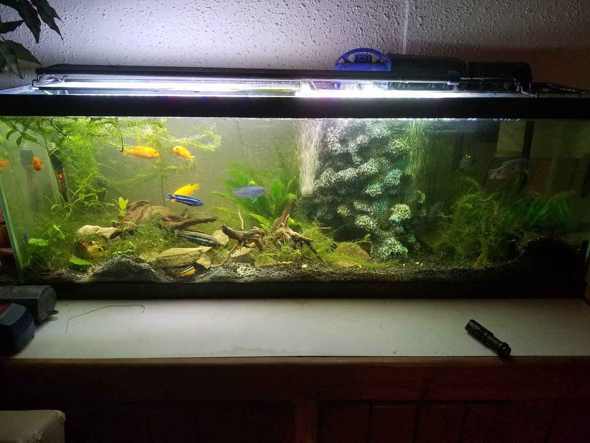 fish tank picture - And a tank matures