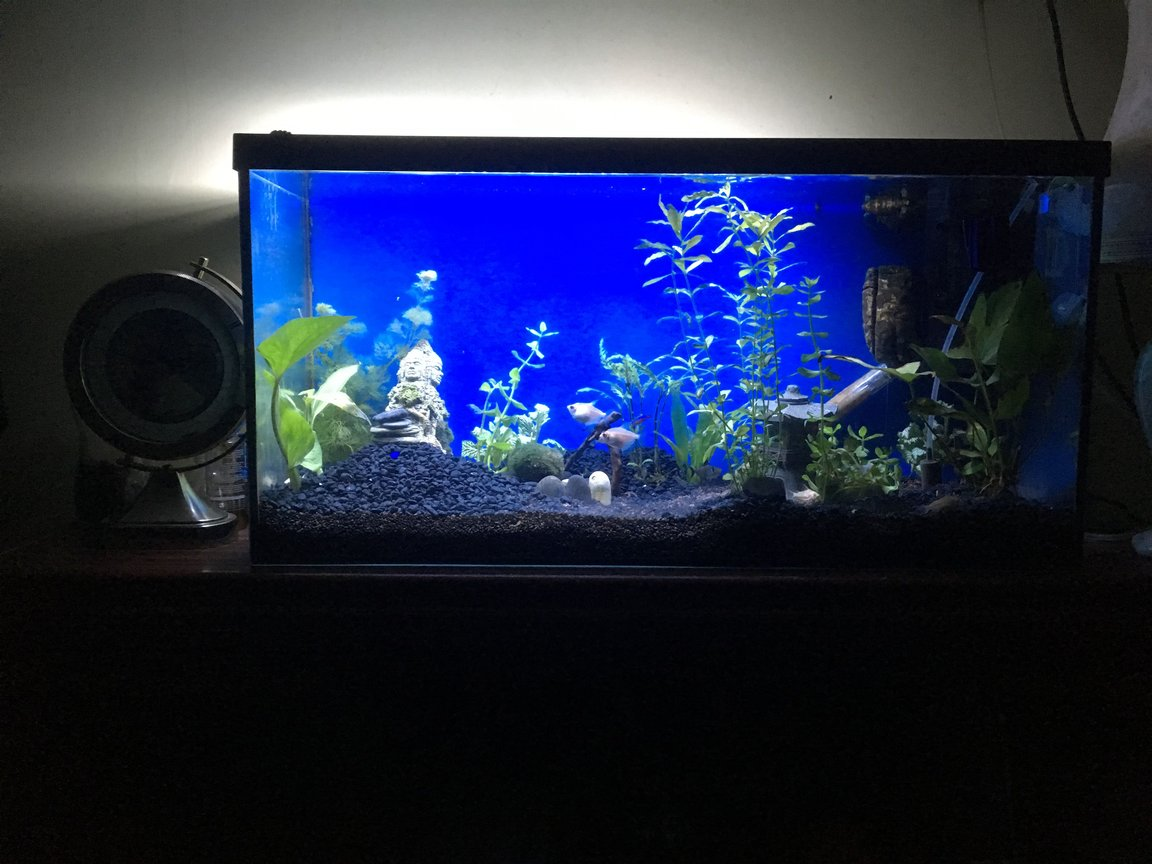 fish tank picture - Took off the backboard and painted the back blue