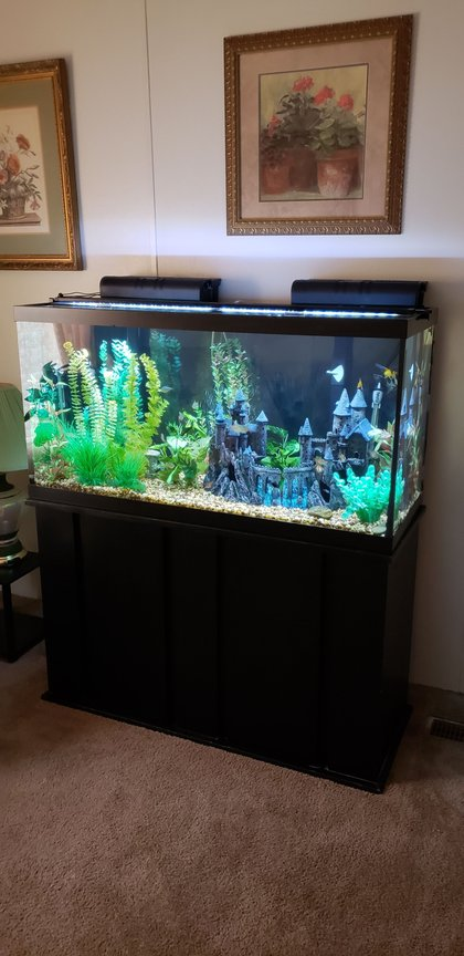 fish tank picture - The Camelot