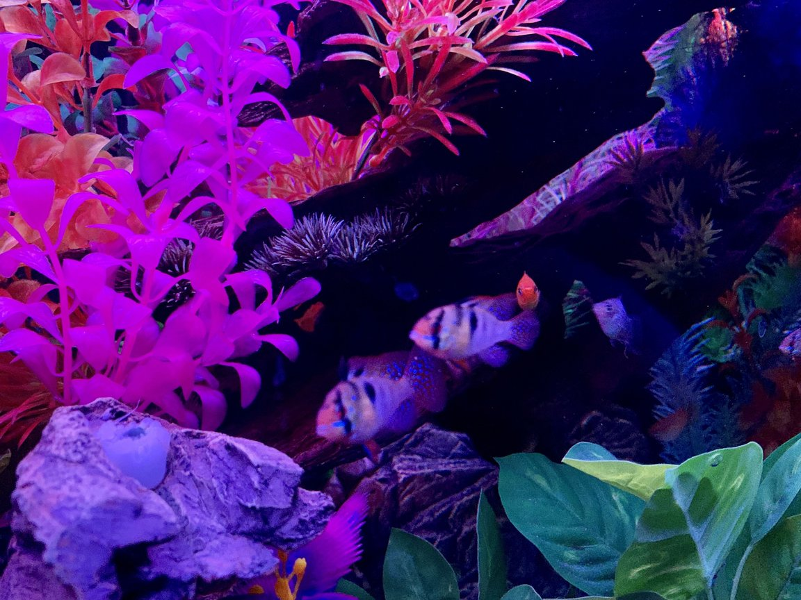 fish tank picture - Rams