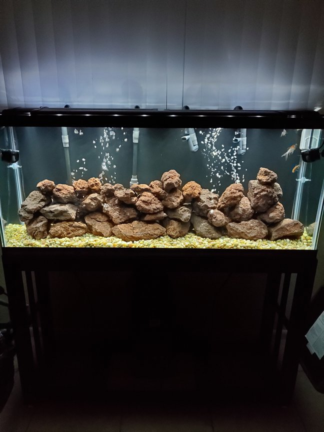 fish tank picture - Added more rocks