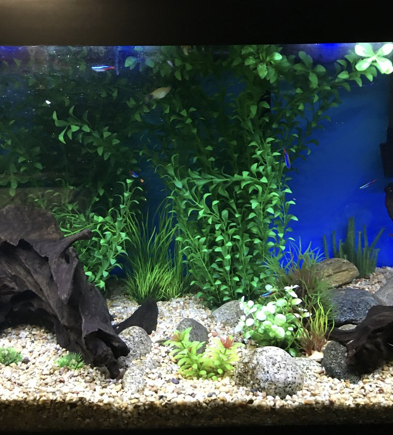 fish tank picture - 2