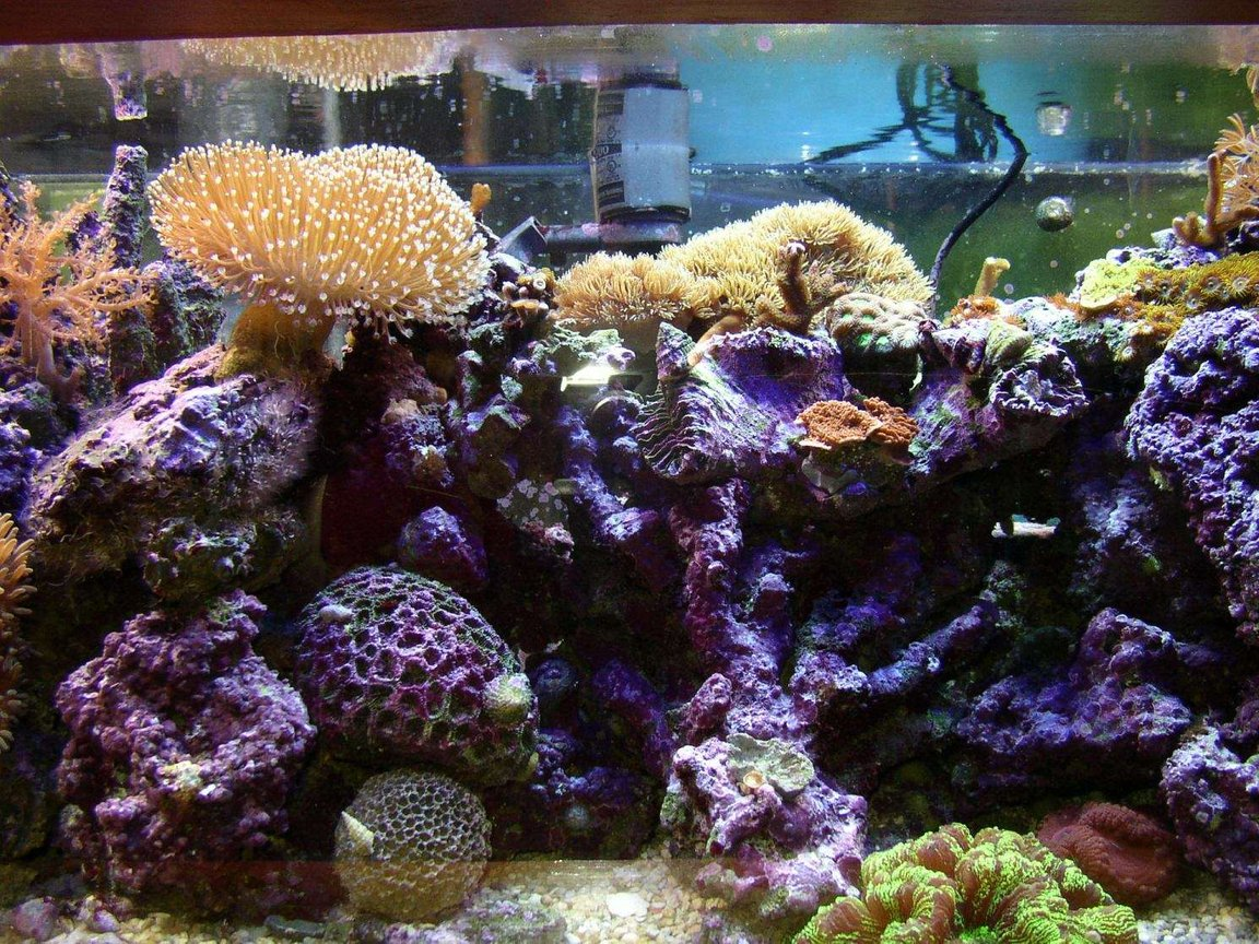 fish tank picture - closeup of 2nd 1/4 of tank