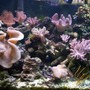 fish tank picture - Rudes Reef Take 3 .