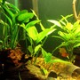 fish tank picture - Image1.