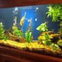 fish tank picture - View 2