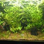 fish tank picture - Low tech Planted Aquarium Dic.06