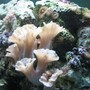fish tank picture - Unknown Sea Creature