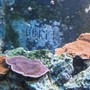 fish tank picture - plate frags