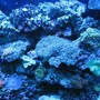 fish tank picture - actinic right