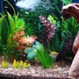 fish tank picture - Close up of fish on left side of tank