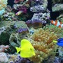 fish tank picture - The fish at play