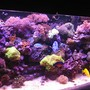fish tank picture - x
