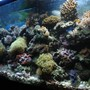 fish tank picture - MORE PICS