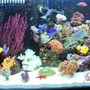 fish tank picture - Javier who has created this site has it rigged so you can't even vote on our pictures (Ryan - The Shepherds Reef Killer who built our tank has a tank posted which is NOT even his - we are done playing your third grade games) We are going to solicite the advertisers and make our own web site and do what we want on it so don't worry we'll be back ad # 1 again just like we were meant to be!!!!!!!!!!!!!!!!!!!!!!!!!!!!!!!!!!!!!) After 3 months, and looking Great (07/08) updated - (Our Tank was custom built by Ryan - Thanks!!!) - WE PURCHASED EVERYTHING IN OUR TANK FROM JEFF'S EXOTIC FISH IN COSTA MESA (714) 540-0880 THEY ARE VERY KNOWLEDGABLE AND CAN GET YOU STARTED EVEN IF YOU JUST WANT A LITTLE NANO TANK. THANKS GUYS!!!!