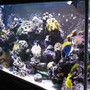 fish tank picture - Corner shot...