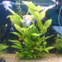 fish tank picture - big plant