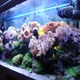 fish tank picture - Right Hand Corner Shot