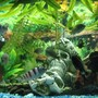fish tank picture - Another shot of my eco...use the magnifier to see if you can count how may fish are peeking. ;P
