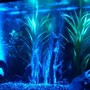 fish tank picture - Night time 1