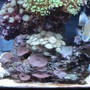 fish tank picture - Mushrooms