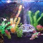 fish tank picture - Additional pic 5
