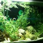 fish tank picture - 3
