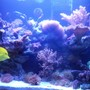 fish tank picture - Right now everything is growing, in a short period of time i will change my RSM for a 200 Gal. tank...