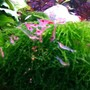 fish tank picture - Shrimps feeding