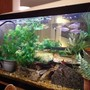 fish tank picture - this is the back view of the tank---i use it for a room divider between kitchen and living room