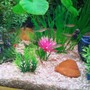 fish tank picture - Some of my rummy noses.....