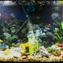 fish tank picture - 55g african cichlids