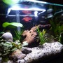 fish tank picture - Close up.